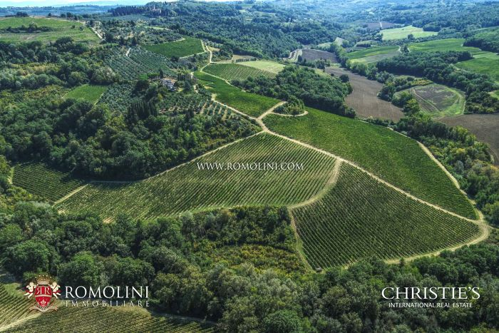 FARM FOR SALE IN CHIANTI VINEYARDS OLIVE GROVE