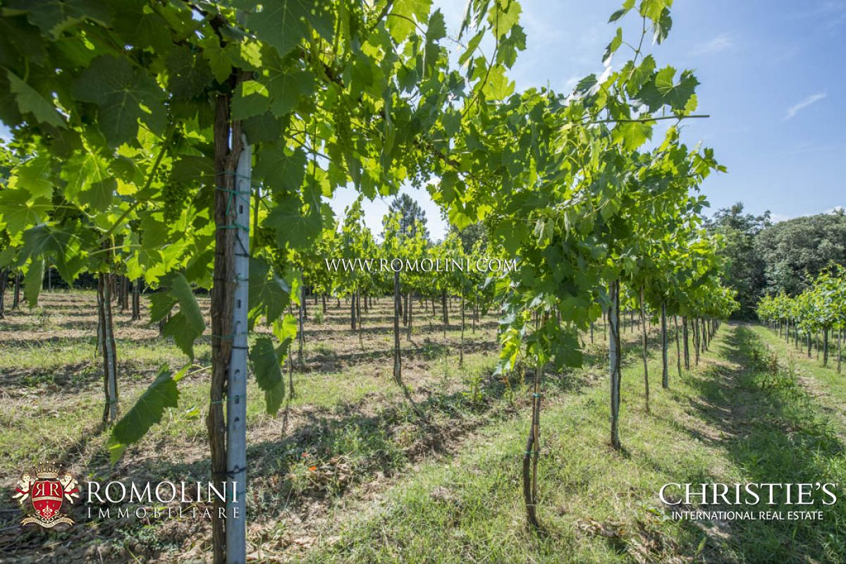 WINE ESTATES FOR SALE TUSCANY