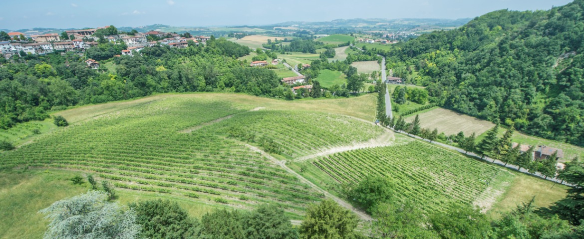 One of the many wineries of Monferrato: the wine business was one of the main protagonists of the Monferrato renaissance after World War II